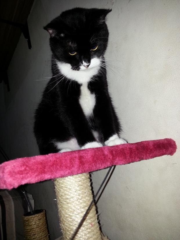 kucing hitam yang lucu